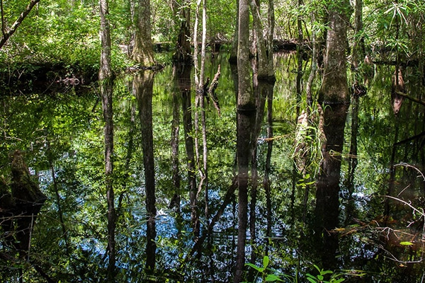 texas camping swamp filled with lush green trees