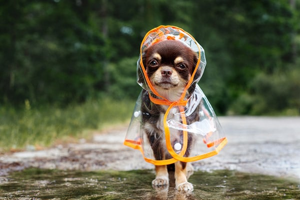 camping with pets prepare for weather
