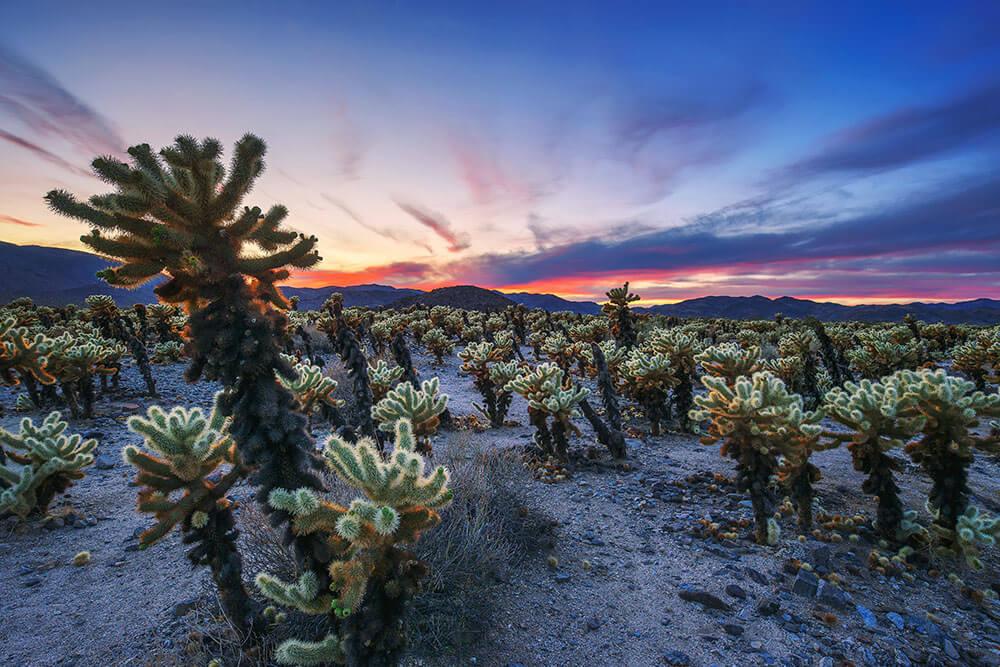 CALIFORNIA – Joshua Tree National Park